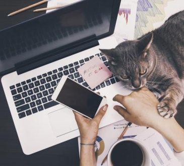 Votre animal de compagnie responsable de votre succès professionnel?
