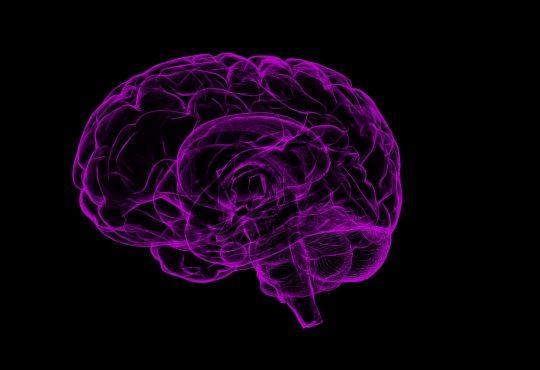 Indécision scolaire et professionnelle: et si le cerveau des ados nous éclairait un peu.