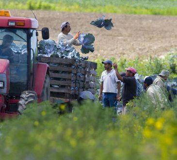 Les travailleurs temporaires étrangers ont plus d'accidents que les autres