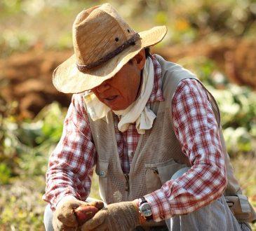 Le gouvernement fédéral veut donner plus de flexibilité aux travailleurs étrangers