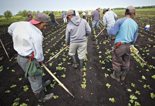 Le Canada a reçu environ la moitié de ses travailleurs étrangers agricoles
