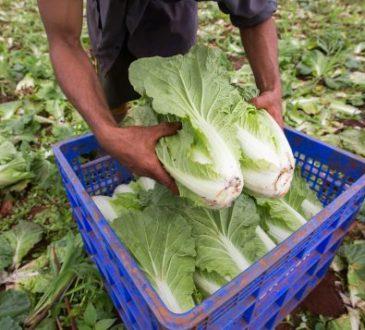 L'Ontario a besoin de 15 000 travailleurs migrants de plus dans ses fermes