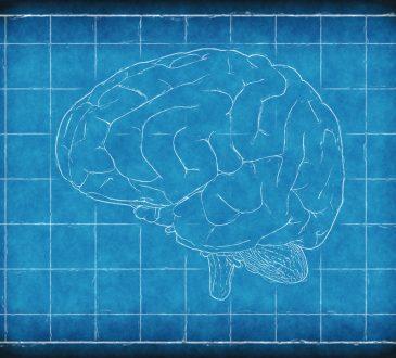 Cinq faits étonnants sur notre cerveau