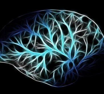 Jongler avec trois 3 cerveaux: connaissances ou croyances?