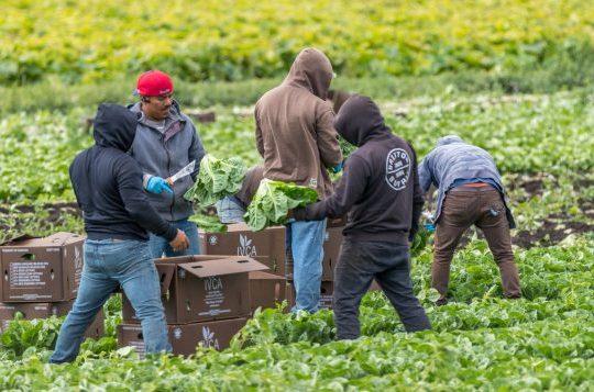 Cri du cœur des travailleurs migrants
