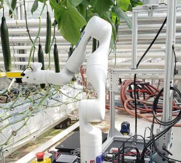 Des robots pourraient bientôt récolter des légumes de serre